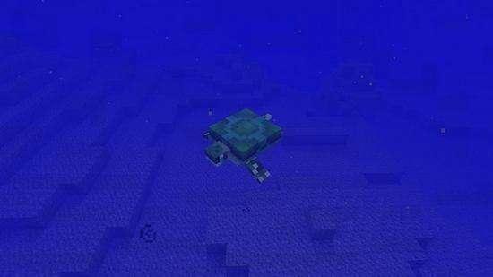 海龟蛋孵化